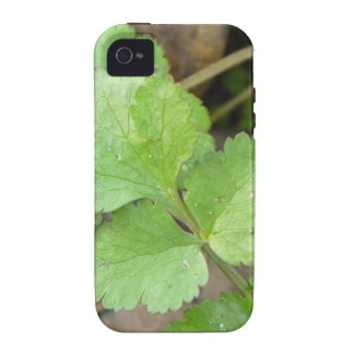 Cilantro Vibe iPhone 4 Case