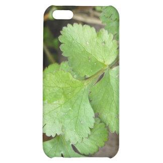 Cilantro iPhone 5C Case