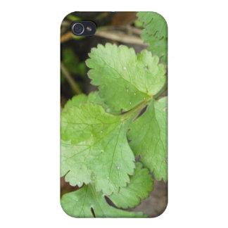 Cilantro iPhone 4 Cover