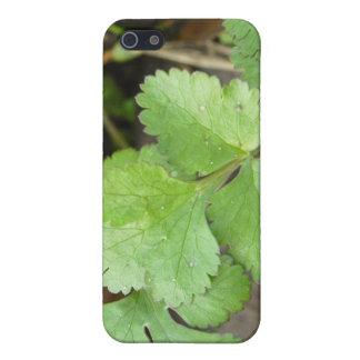Cilantro Cases For iPhone 5