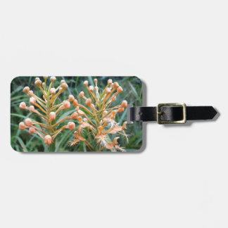 Ciliaris franjados amarillo del Platanthera de la Etiqueta De Maleta