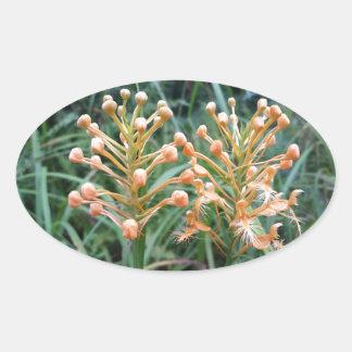 Ciliaris franjados amarillo del Platanthera de la Pegatina Ovalada