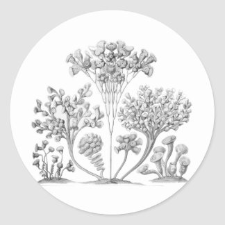 Ciliata Classic Round Sticker