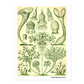 Ciliatas de Ernst Haeckel Postal