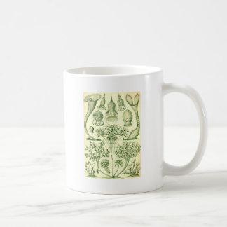 Ciliatas de Ernst Haeckel Taza De Café