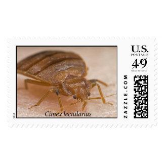 Cimex lectularius postage stamp