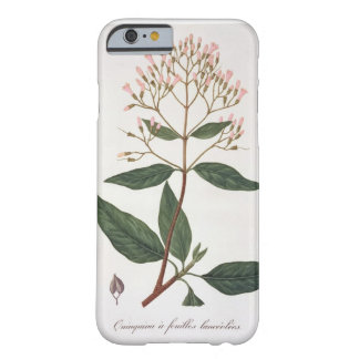 Cinchona from 'Phytographie Medicale' by Joseph Ro Barely There iPhone 6 Case