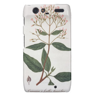 Cinchona from 'Phytographie Medicale' by Joseph Ro Droid RAZR Cover