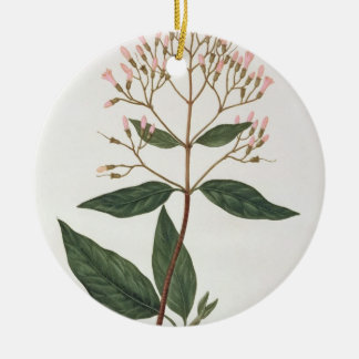 Cinchona from 'Phytographie Medicale' by Joseph Ro Ceramic Ornament