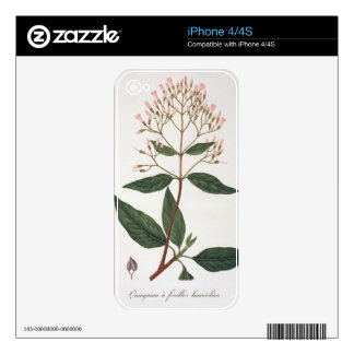 Cinchona from 'Phytographie Medicale' by Joseph Ro Decals For The iPhone 4