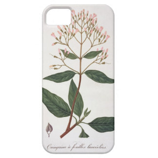 Cinchona from 'Phytographie Medicale' by Joseph Ro iPhone SE/5/5s Case