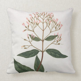 Cinchona from 'Phytographie Medicale' by Joseph Ro Throw Pillow