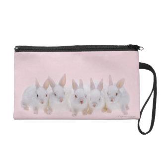 Cinco conejos 2