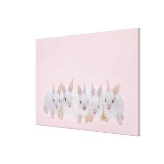 Cinco conejos impresión en lienzo estirada