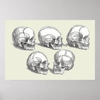 Cinco cráneos póster