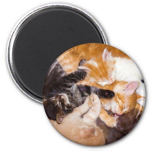 Cinco gatitos que duermen con su gato de la madre imán para frigorifico