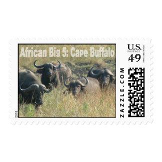 Cinco grandes africanos: Búfalo del cabo Estampillas