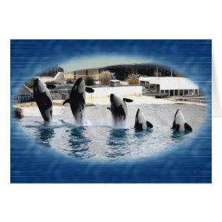 ¡Cinco Orcas en Marineland Francia Felicitación