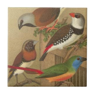 Cinco pájaros coloridos del mascota encaramados en azulejo cuadrado pequeño