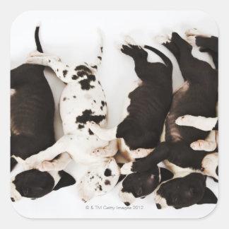 Cinco perritos de great dane del Harlequin que Pegatina Cuadrada