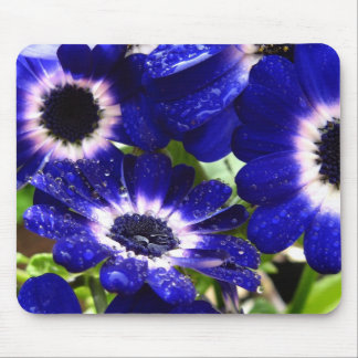 Cineraria Mouse Pads