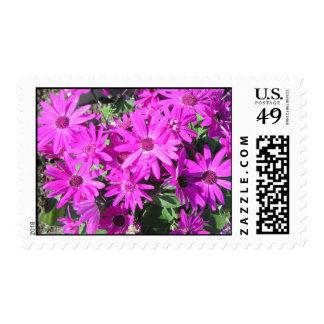 Cineraria Postage Stamp
