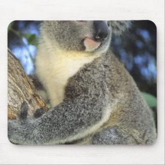 Cinereus de la koala, del Phascolarctos), Australi Mouse Pads