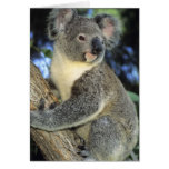 Cinereus de la koala, del Phascolarctos), Australi Felicitaciones