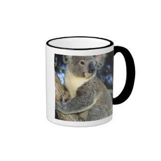 Cinereus de la koala, del Phascolarctos), Australi Tazas De Café