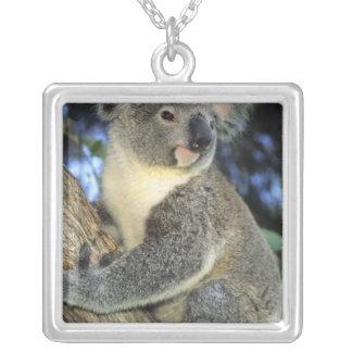 Cinereus de la koala, del Phascolarctos), Colgante Cuadrado