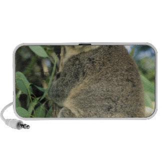 Cinereus de la koala del Phascolarctos en pelig iPhone Altavoces