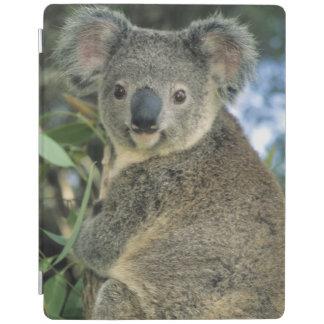 Cinereus de la koala, del Phascolarctos), en pelig Cubierta De iPad