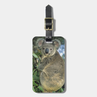Cinereus de la koala, del Phascolarctos), en pelig Etiquetas Maleta
