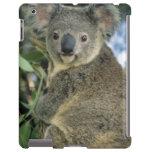 Cinereus de la koala, del Phascolarctos), en pelig Funda Para iPad