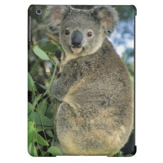 Cinereus de la koala, del Phascolarctos), en pelig Funda Para iPad Air