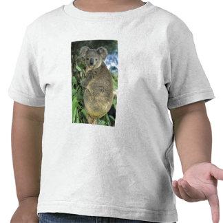 Cinereus de la koala del Phascolarctos en pelig Camiseta