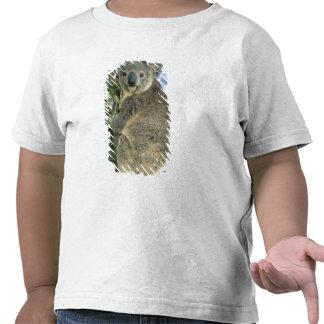 Cinereus de la koala del Phascolarctos en pelig Camisetas