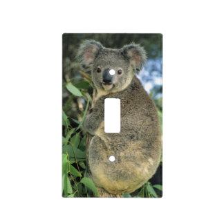 Cinereus de la koala, del Phascolarctos), en pelig Placa Para Interruptor