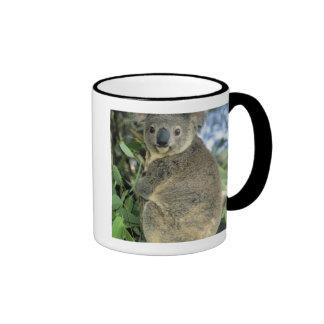 Cinereus de la koala, del Phascolarctos), en pelig Taza