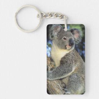 Cinereus de la koala, del Phascolarctos), Llavero Rectangular Acrílico A Doble Cara