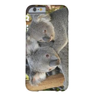 Cinereus Queensland del Phascolarctos de la koala. Funda De iPhone 6 Barely There