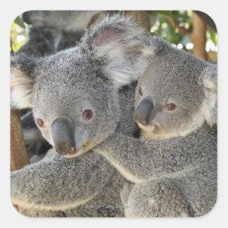 Cinereus Queensland del Phascolarctos de la koala. Pegatinas Cuadradases