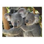 Cinereus Queensland del Phascolarctos de la koala. Postales