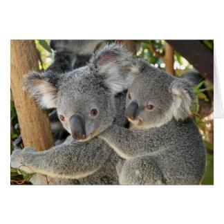 Cinereus Queensland del Phascolarctos de la koala. Tarjetón