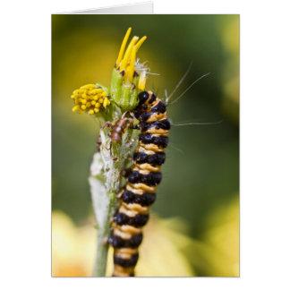 Cinnabar moth Orange Stripey Caterpillar Card