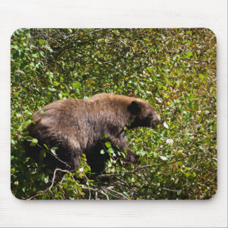 Cinnamon Black Bear Mouse Pad