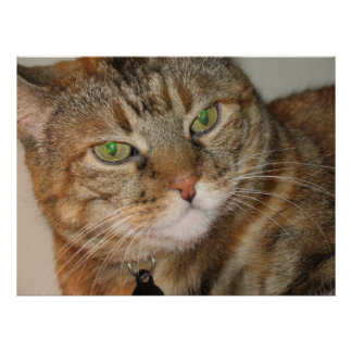 cinnamon cat print
