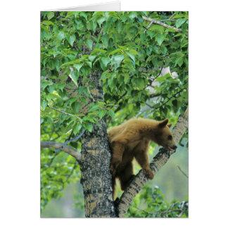 Cinnamon colored black bear in aspen tree in card