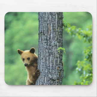 Cinnamon colored black bear in tree in mouse pad