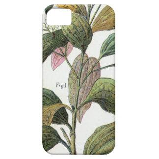 Cinnamon Girl iPhone 5 Case